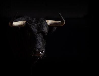 Bullenmarkt schlägt Bärenmarkt